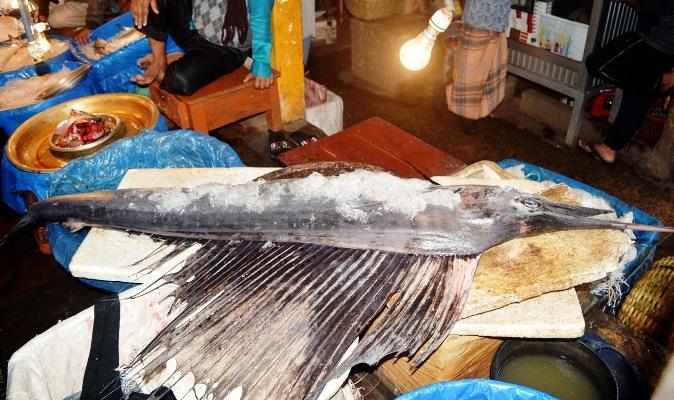 লালবাজারে পংখিরাজ মাছ, জনতার ভীড়