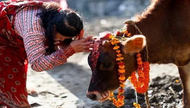 গোরু পূজারীদের জয়, শ্রীলংকায় গোহত্যা নিষিদ্ধ